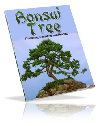 Bonsai Trees: Growing, Trimming, Sculpting & Pruning