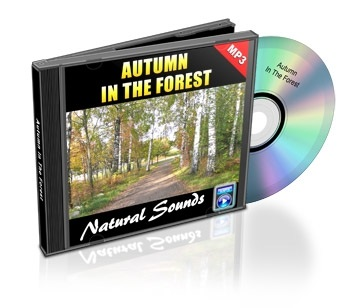 Natural Sounds, Volume 6: Autumn in the Forest